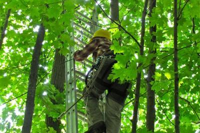 Amana Bunce climbing