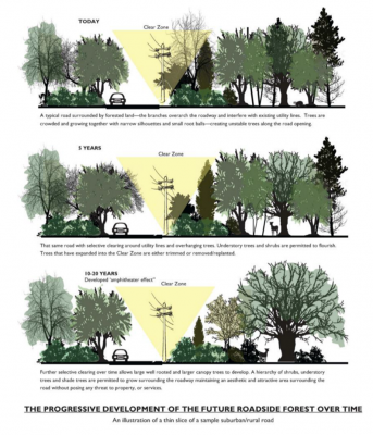 graphic of future roadside forest