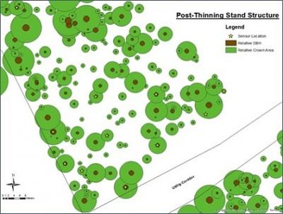 tree biomechanics - post thinning