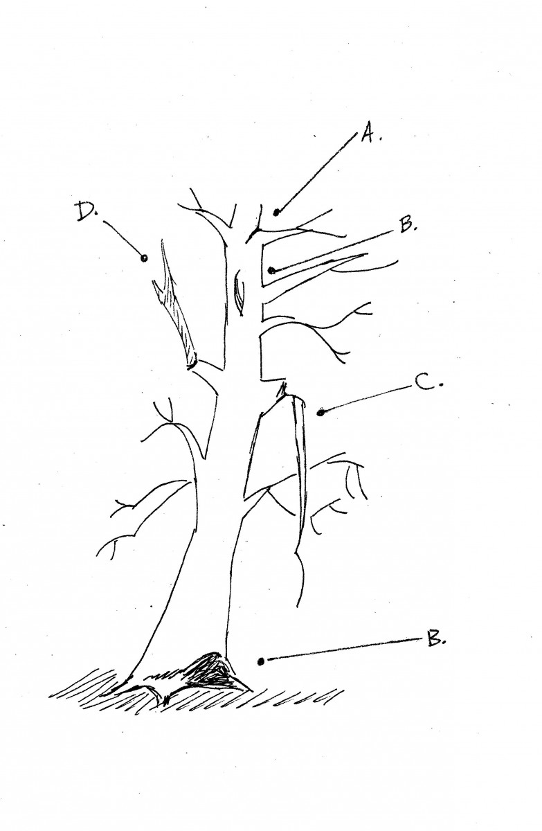 tree sketch with defects