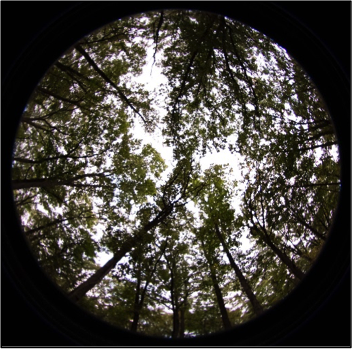"Hemispherical or ""fisheye"" canopy photograph"